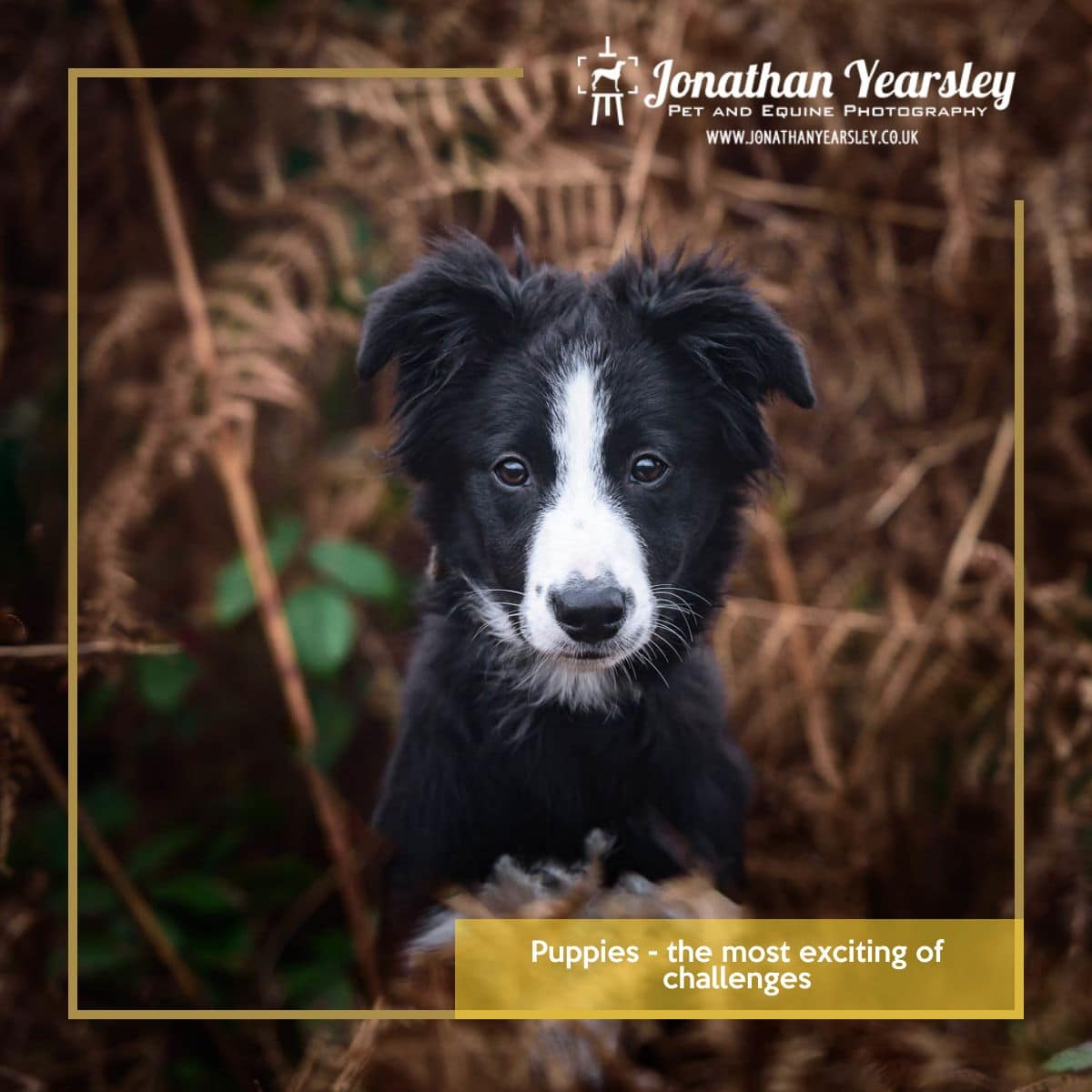 Puppies-the-most-exciting-of-challenges-to-photograph