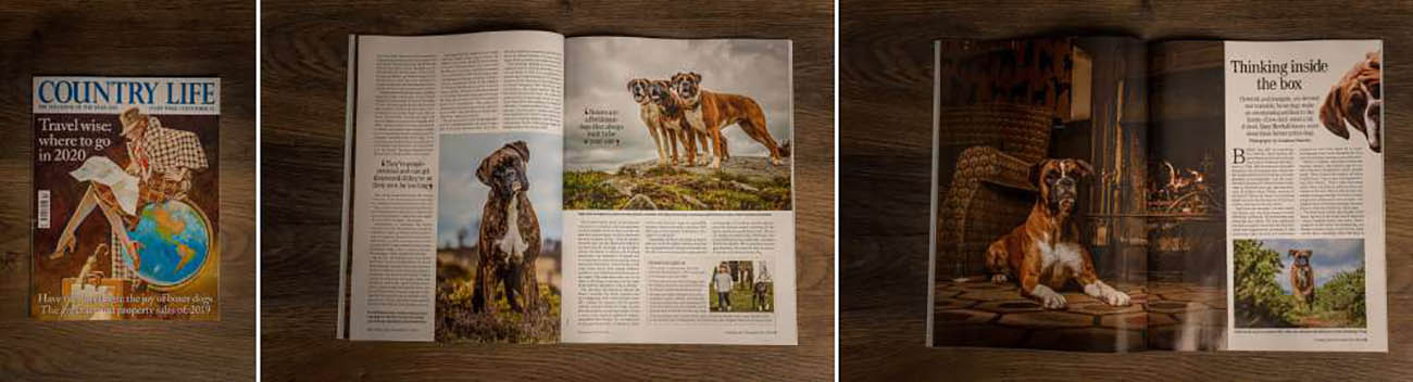 Published in Country Life magazine - Boxers - Professional Dog Photographer