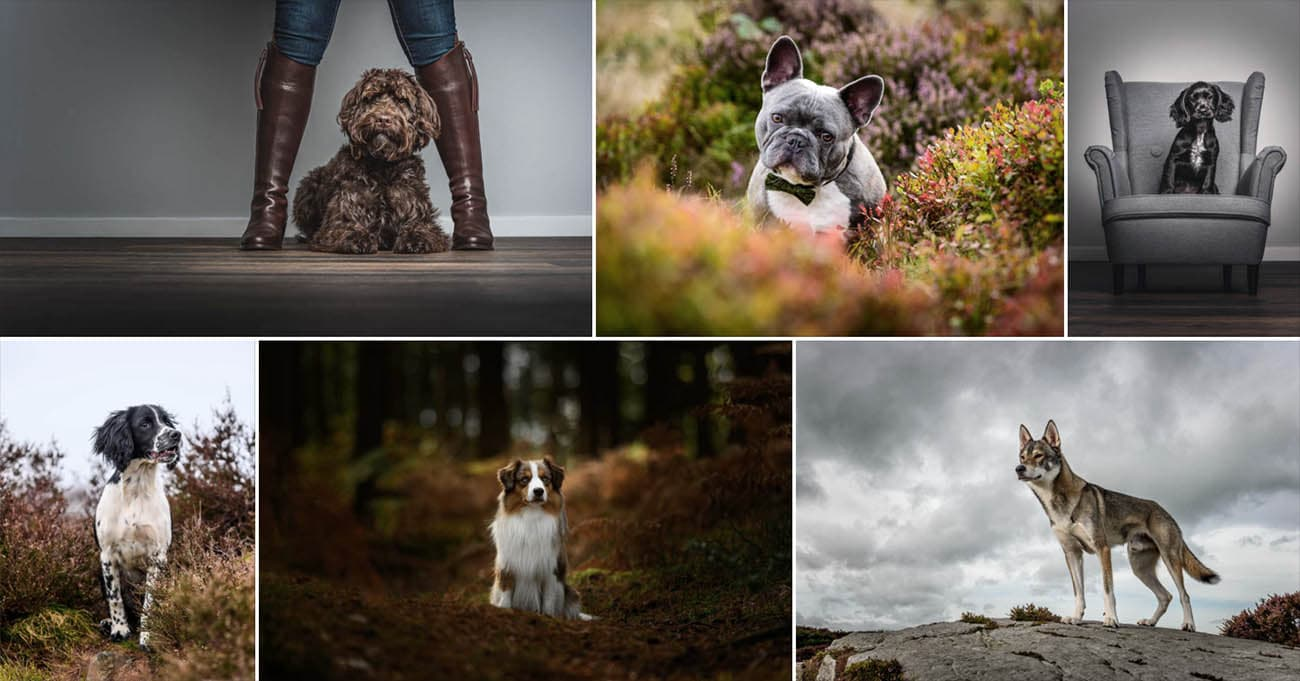 Award winning dog photographer
