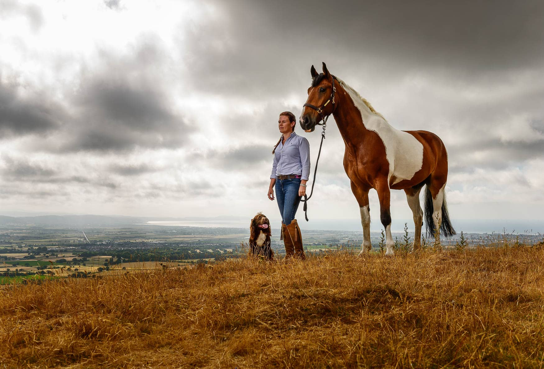 Sport Horse - North Wales equine photographer
