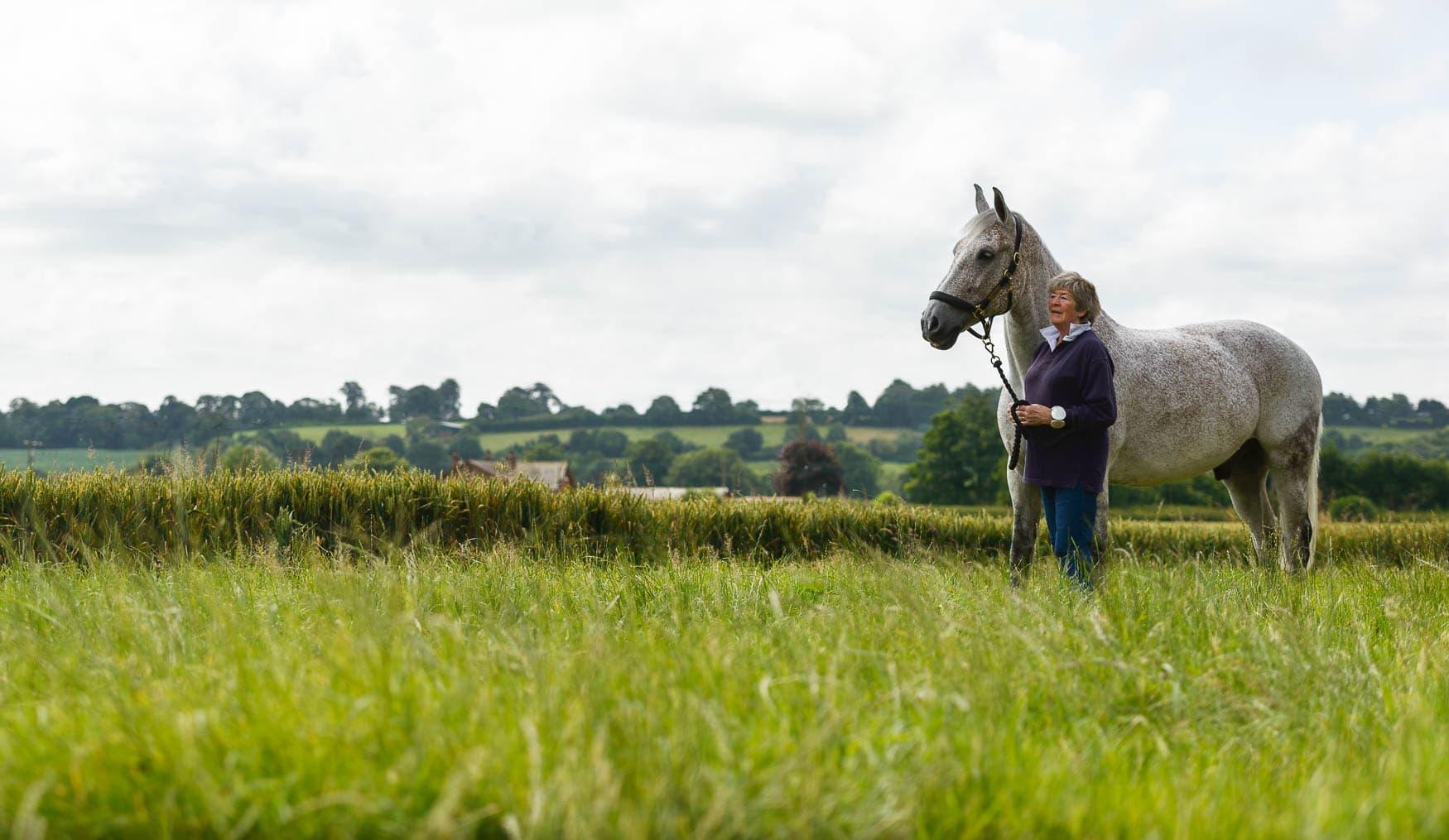 Grey horse - Cheshire