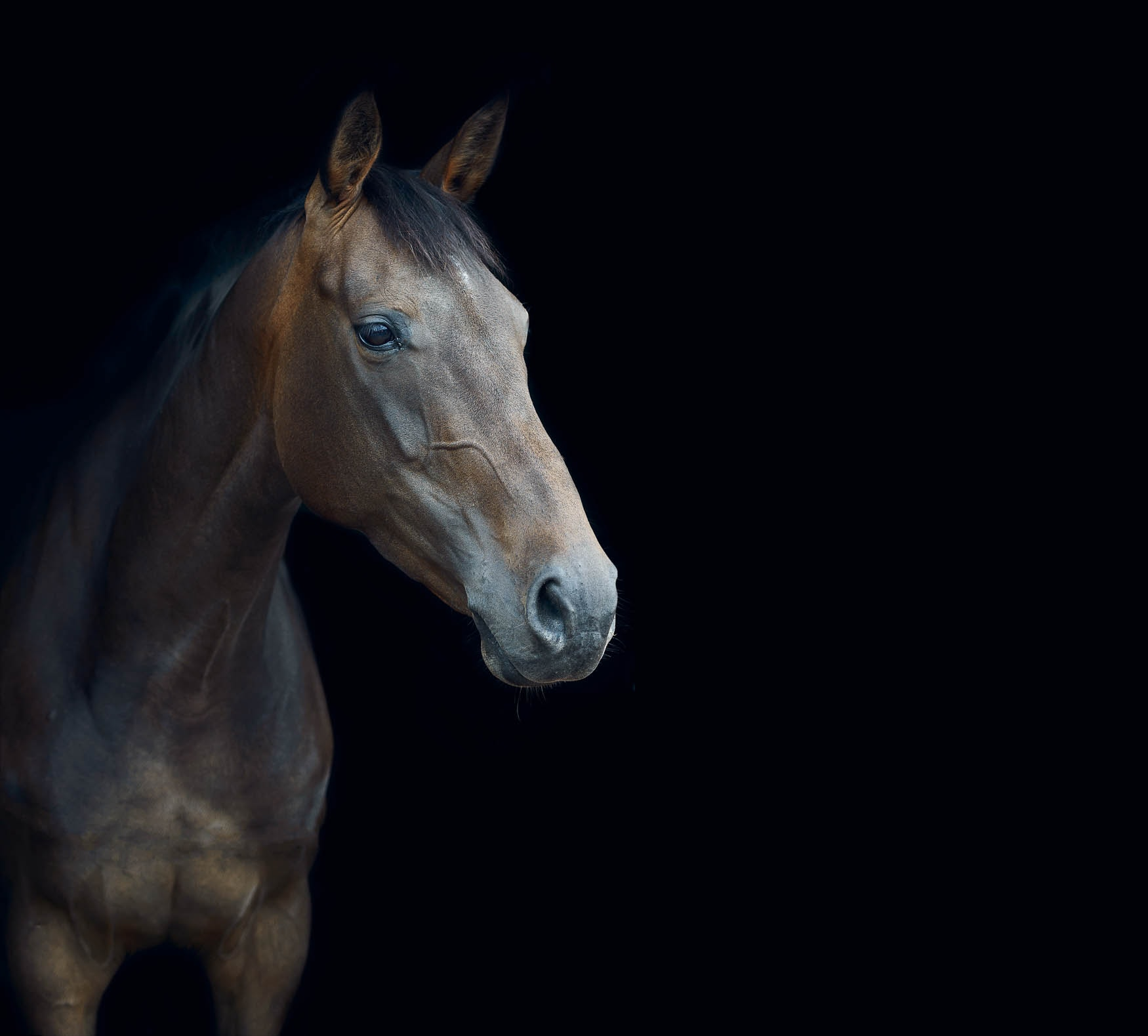 Eventing horse in stables - Photographer Cheshire