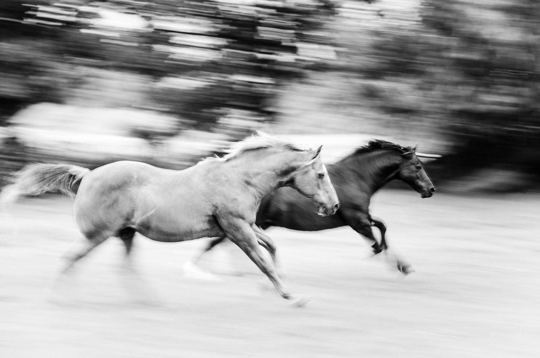 At liberty horse photography