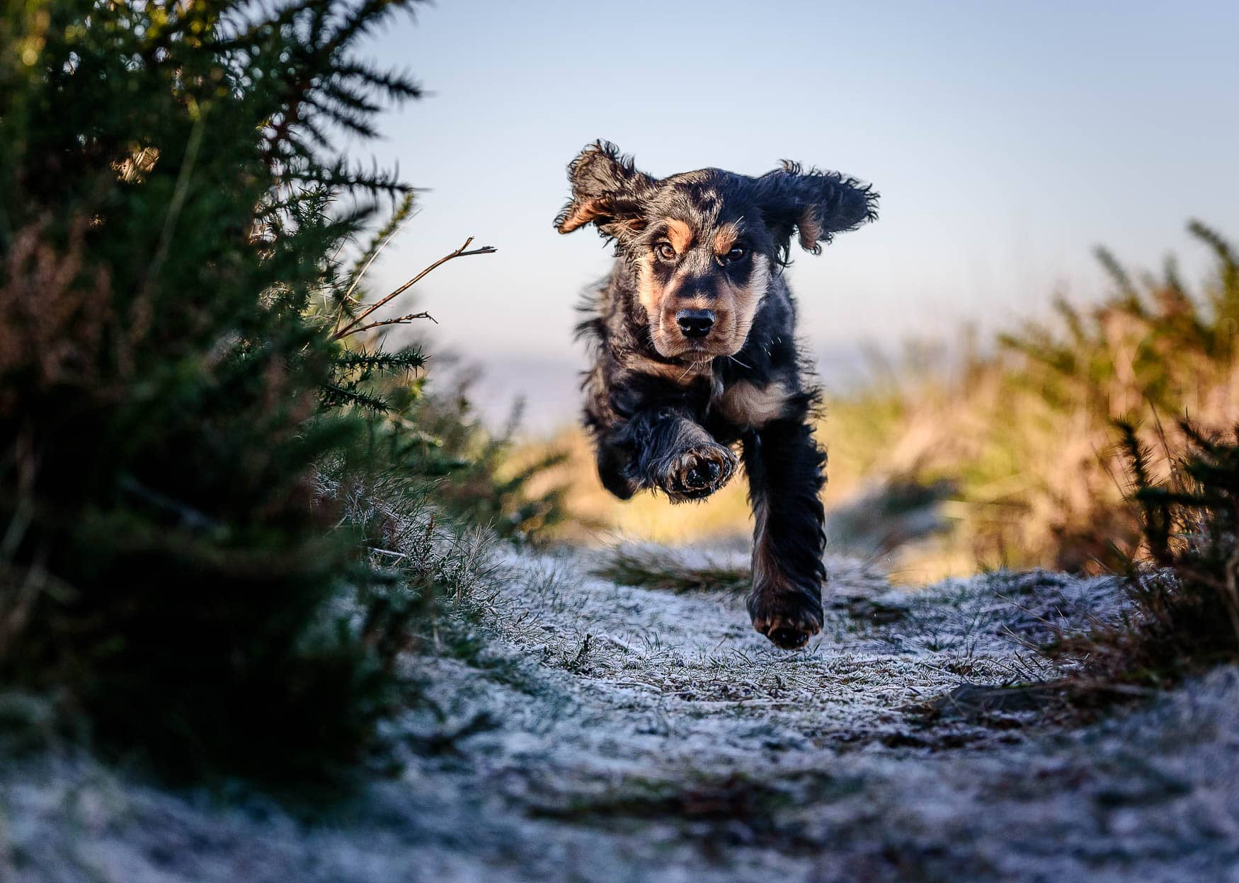 Dog Photographer North Wales Cheshire