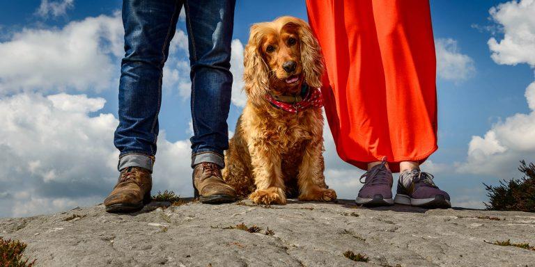 Manchester Dog Photographer - Show Cocker Spaniel