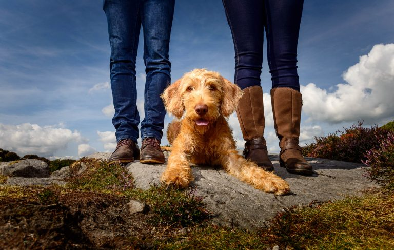 Manchester Dog Photography - Labradoodle puppy