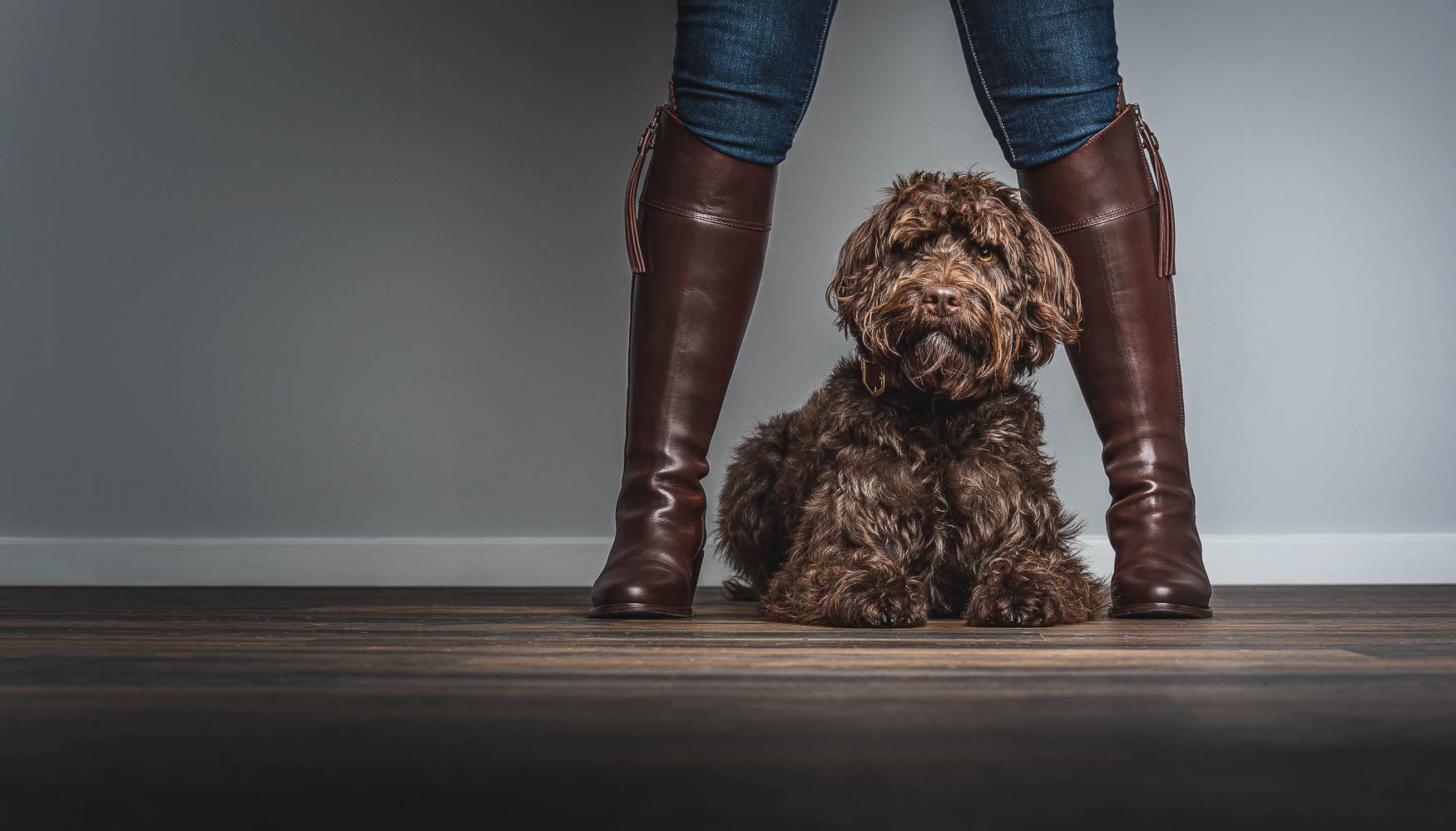 Fine art studio dog photographer Cheshire - Cockapoo
