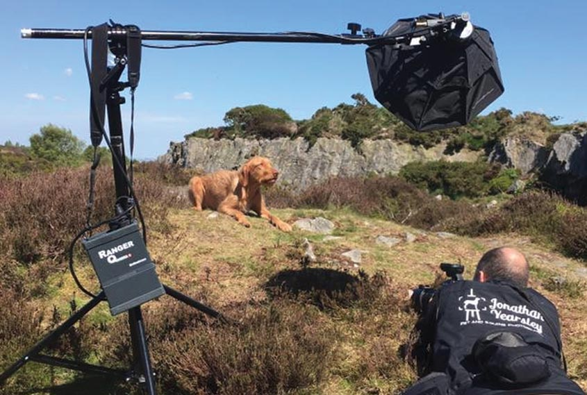 Dog photography trainer for keen amateurs and professional - across the UK
