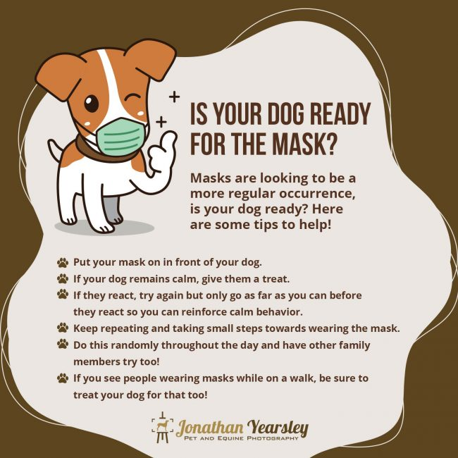 covid-masks-dogs-infographic
