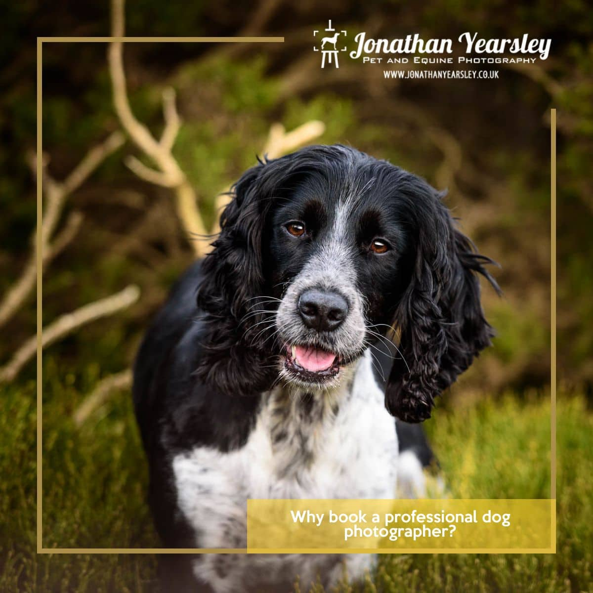 Why-book-a-professional-dog-photographer