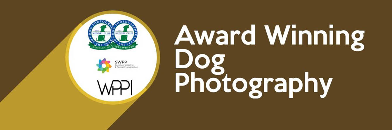 award-winning-dog-photography-banner