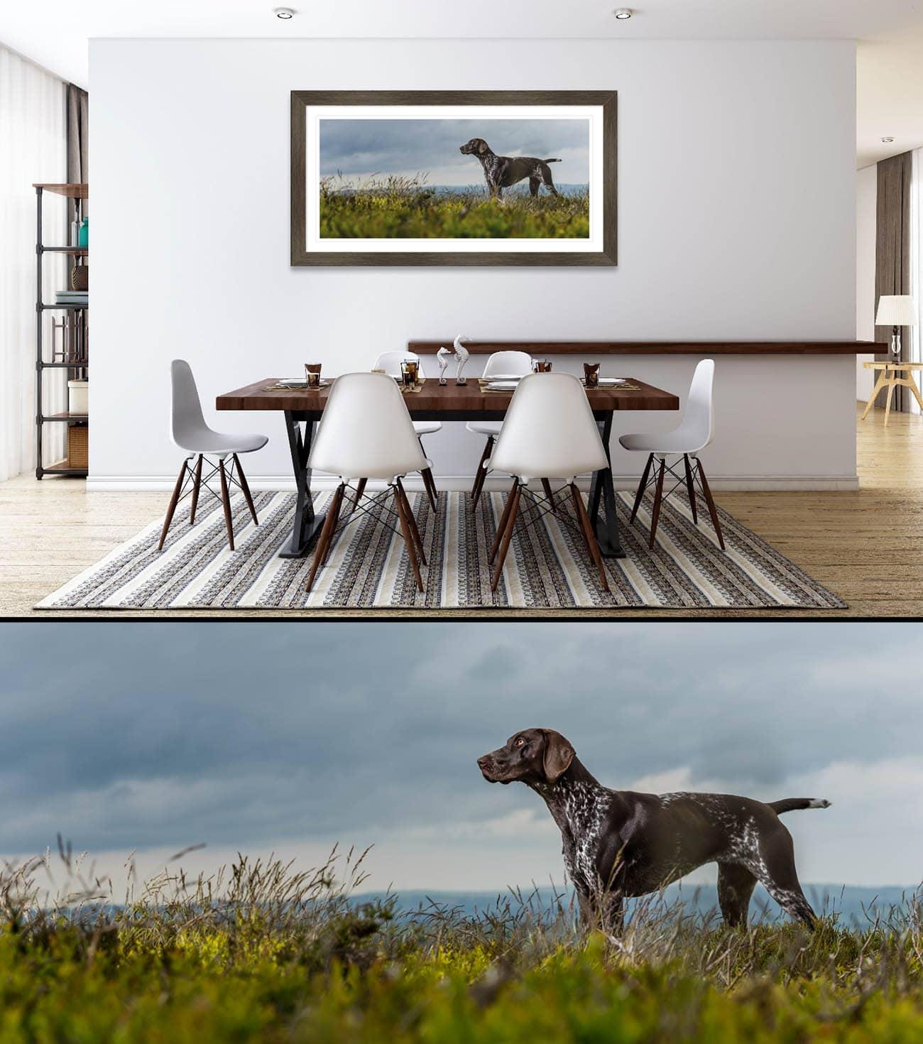 German-Shorthaired-pointer-award-winning-dog