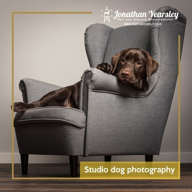 Studio dog photography blog header
