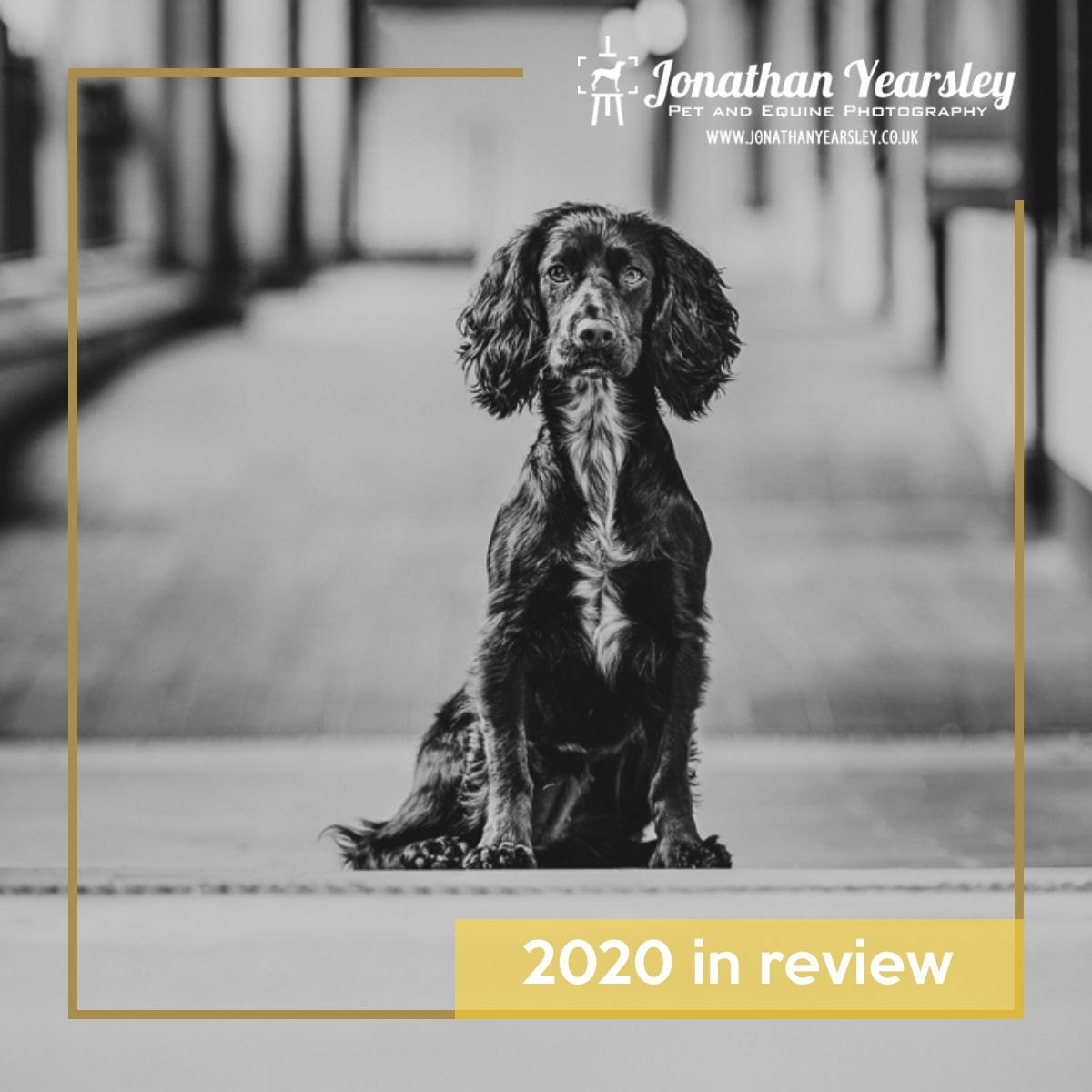 dog-photography-2020-in-review