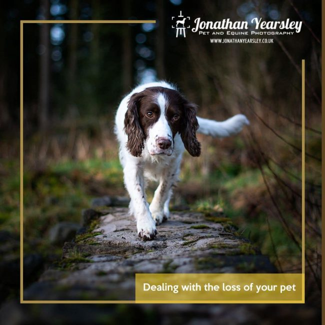 Dealing with the loss of your pet