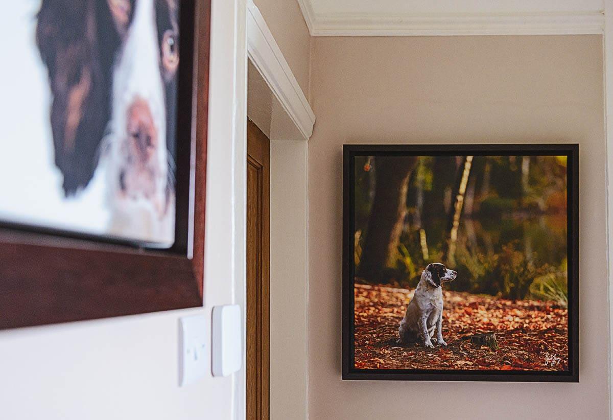 Wall art dogs hall